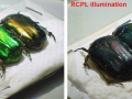 Beetles illuminated with CPL